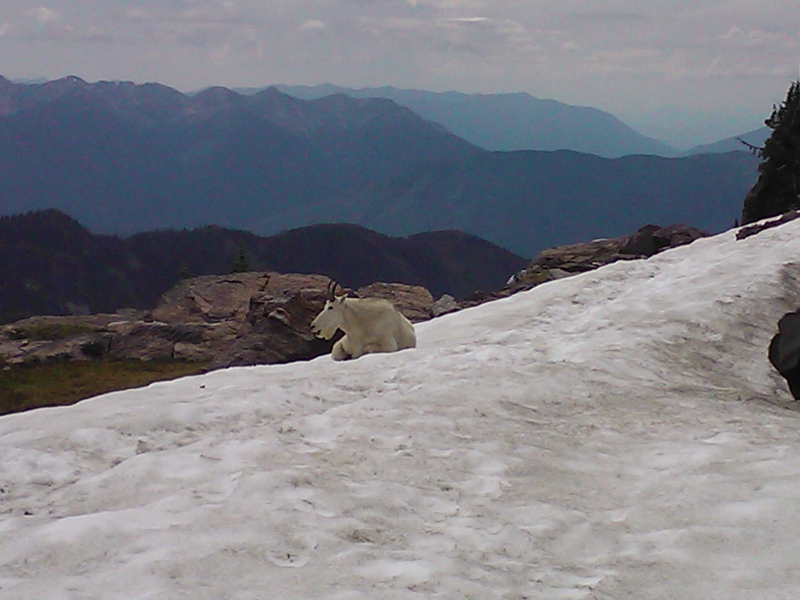 Glacier national park sperry glacier and fish lake for Fishing in glacier national park